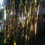 Bamboo in the garden.