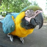Macaw at Wetheriggs