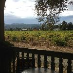 Vineyard view -- beautiful!