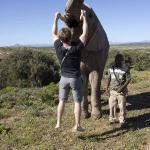 Picking up the elephants