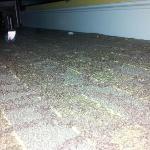 So-so clean carpet in bay view room