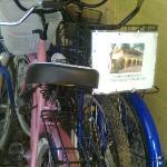 Alquilamos Bicicletas