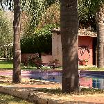 pool and donkey