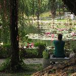 満開の蓮が浮かんだ池を前に、ゆっくり
