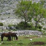 Nature Park Biokovo