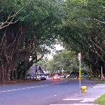 Street adjacent to hotel, Banyan Drive