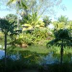 room view of pond & gardens with beach & caribbean byond