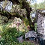 Foto de Whiffin Spit Lodge Bed and Breakfast