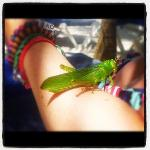 a little friend we found in the sea....saved!!