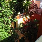View from treehouse room in courtyard