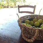 Un po' di frutta colta dagli alberi vicini ...