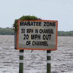 Manatee zone