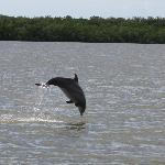 Dolphin shot on tour