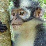Jungle Edie - Private Tours