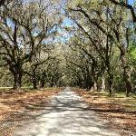 1.5 mile entry with spanish moss