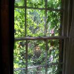 Bedroom sash window covered with ivy making the room very dark