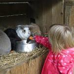 Feeding the rabbits!