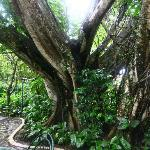 mystical ancient trees surround the casitas
