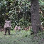 more warthog babies