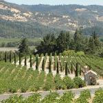 Castle vineyard (reminds me of Tuscany)