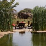 View from pool - elephants etc drinking from waterhole while you swim