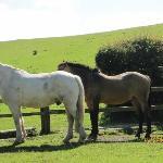 It is a horsefarm also