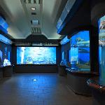 Shibukawa Marine Aquariums (Tamano City Marine Museum)