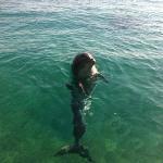 friendly dolphin