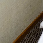 Mold or bed bug spots on the wall - bed level.