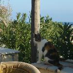 view from the terrace, with one of the cats of the house