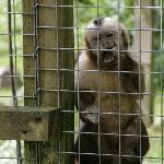 Monkey Sanctuary, Looe