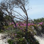 Photo de Sonnenhotel del Golfo