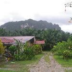 site palmview