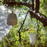 the garden lantern