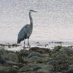 A heron at dawn.
