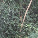 jungle outside room