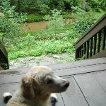 Jack enjoying the covered porch and river view after a heavy rain storm