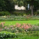 Flores y pasto
