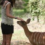 Mountain Lodge houseguest with a young Nyala
