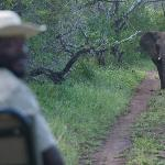 Pat (tracker) and Elephant on our safari