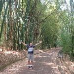 bajo la catedral de bambu