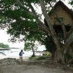Tree house at the cove