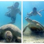 Snorkelling with Turtle at Turtle Point