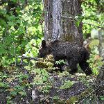 Baby bear escaping