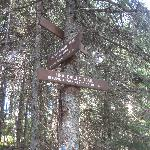 Fire Tower trail junction