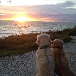 Hugo and Hudson watching the sunset at The Scarlet