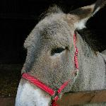 one of the beautiful donkeys at Hillside, West Runton