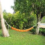 Our hammock in our front yard!
