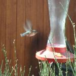 Hummingbird feeder outside our window table