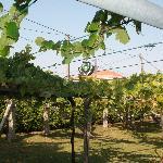 Jardín-Viñedo Pazo Carrsqueria
